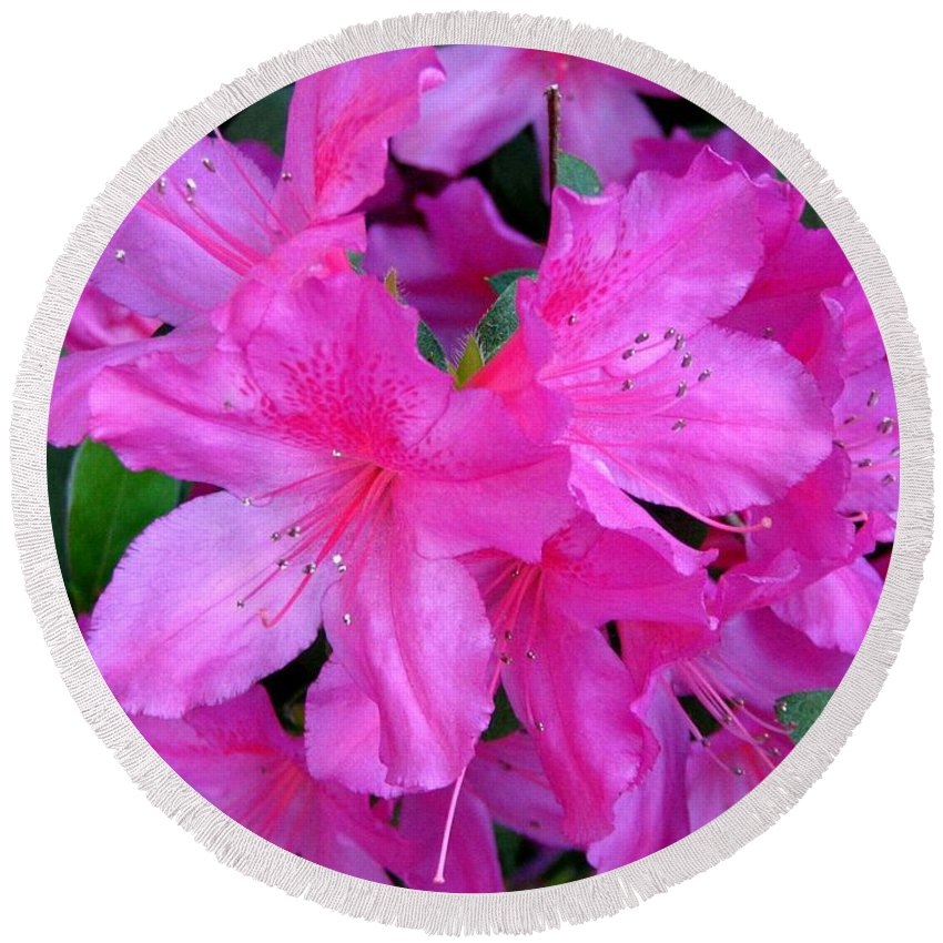 Azalea Round Beach Towel featuring the photograph A Burst Of Pink by J M Farris Photography