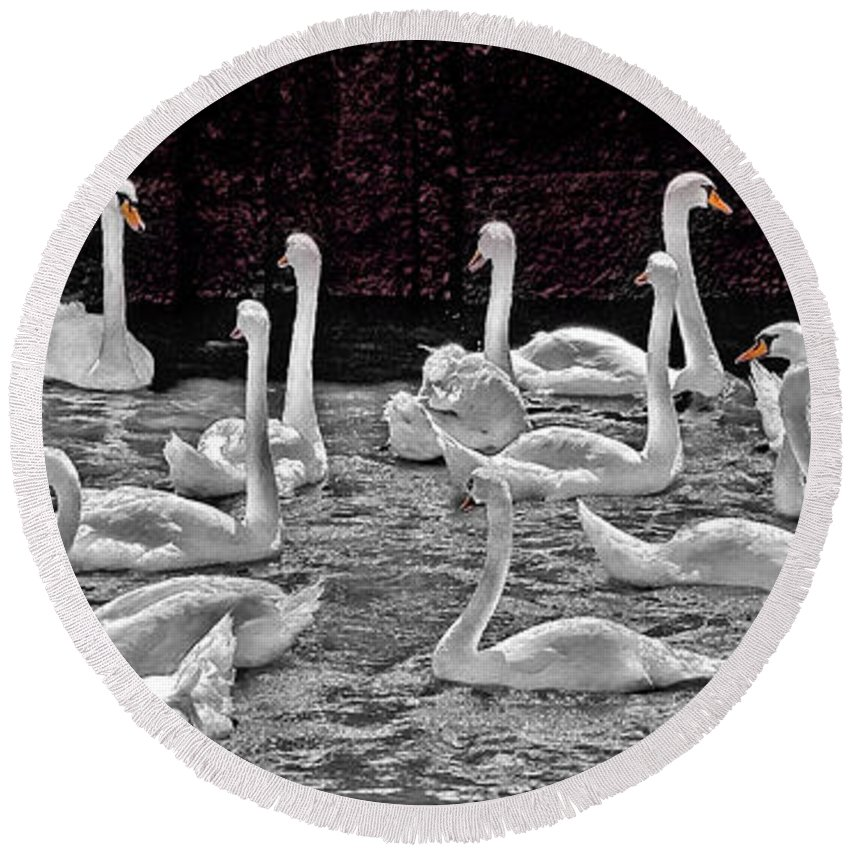 Swan Round Beach Towel featuring the photograph A Cacophony Of Swans by Chris Lord