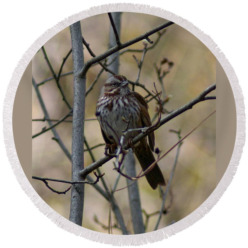 Birds Round Beach Towel featuring the photograph A Chipping Sparrow by Ben Upham III