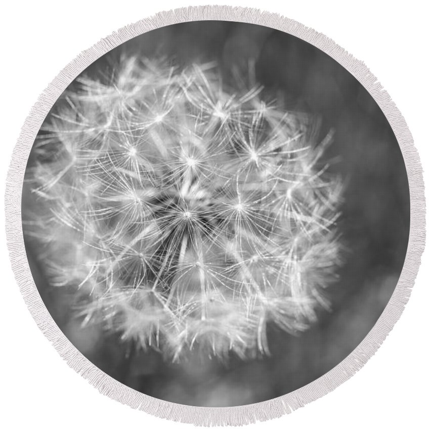 Terry D Photography Round Beach Towel featuring the photograph A Dandelion Black And White by Terry DeLuco