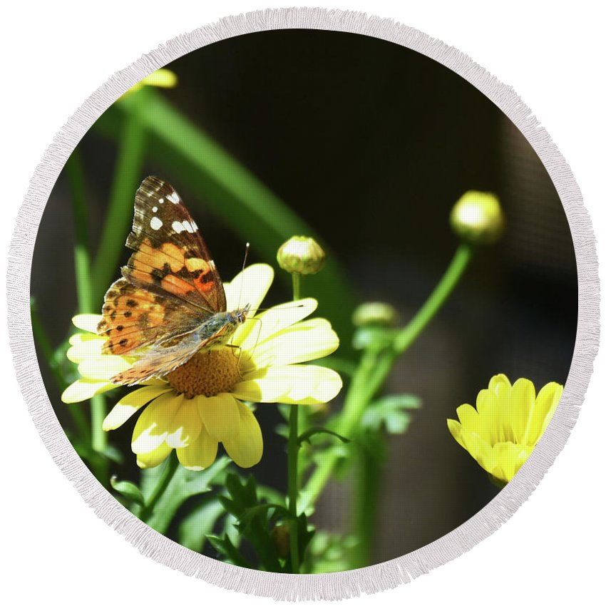 Painted Lady Round Beach Towel featuring the photograph A Day Of Daisies by Sally Sperry