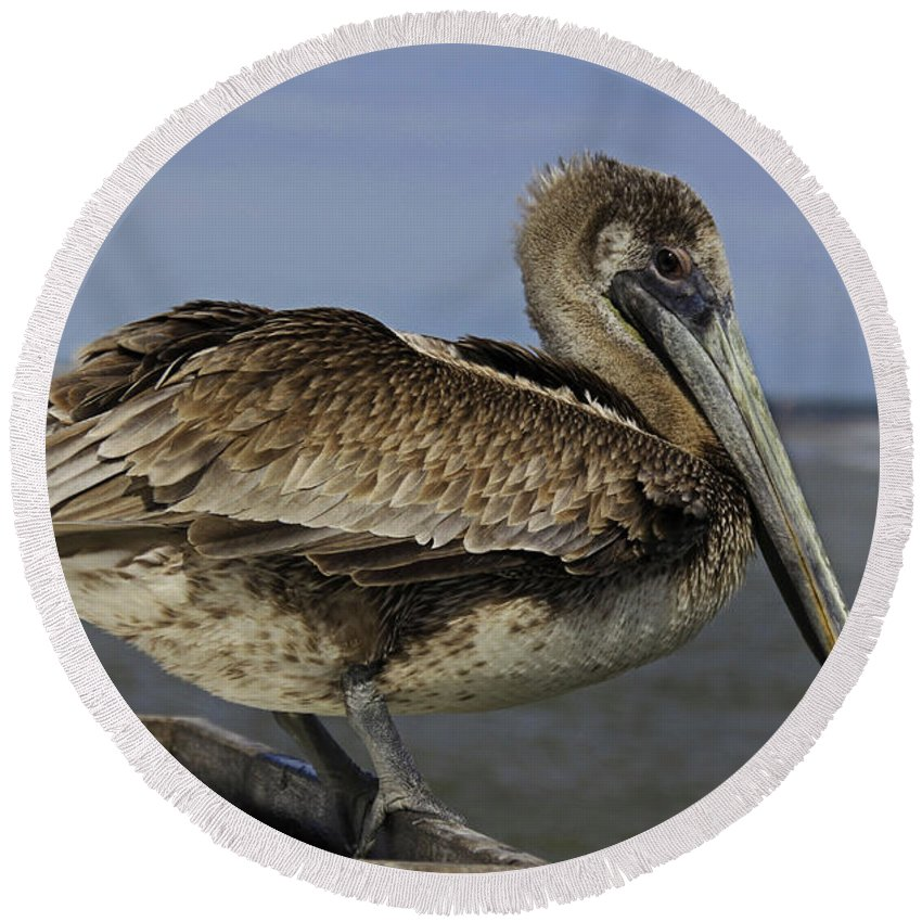 Pelican Round Beach Towel featuring the photograph A Dazzling Drifter I by Michiale Schneider