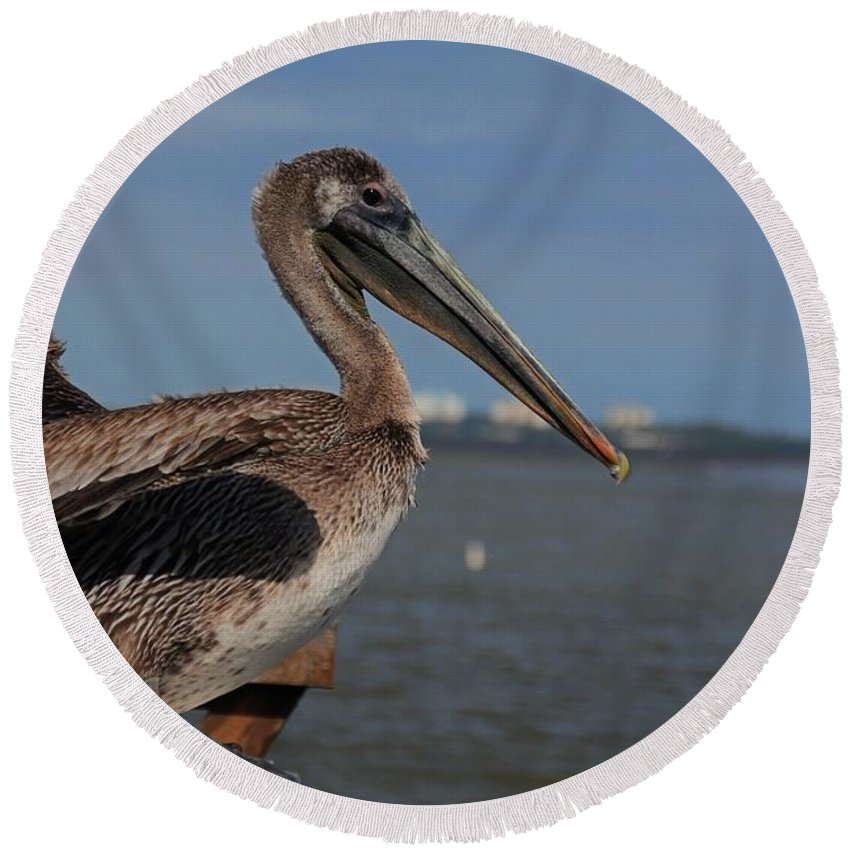 Pelican Round Beach Towel featuring the photograph A Dazzling Drifter II by Michiale Schneider