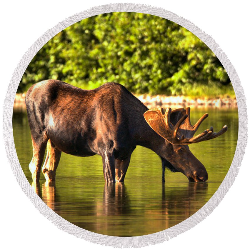 Moose Round Beach Towel featuring the photograph A Drink At Fishercap by Adam Jewell