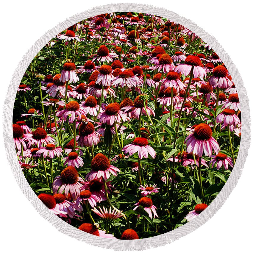 Clay Round Beach Towel featuring the photograph A Field Of Echinacea by Clayton Bruster