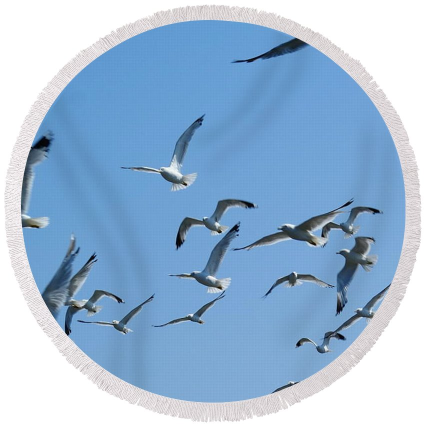Birds Round Beach Towel featuring the photograph A Flock Of Seagulls by Ben Upham III