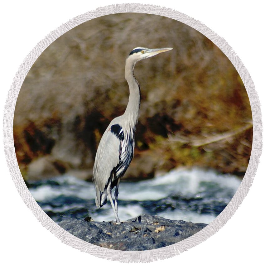 Birds Round Beach Towel featuring the photograph A Great Blue Heron At The Spokane River 2 by Ben Upham III
