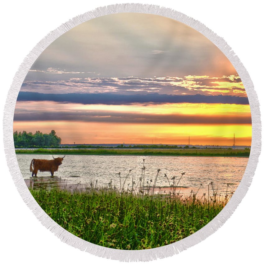 Highland Round Beach Towel featuring the photograph A Highland Cow In The Lowlands by Frans Blok