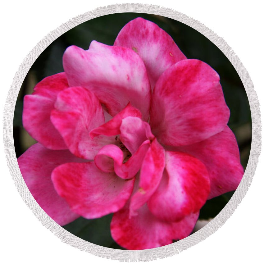 Floral Round Beach Towel featuring the photograph A Knockout Pink by Paul Anderson