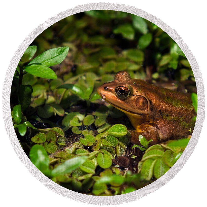 Frog Round Beach Towel featuring the photograph A Little Bronze by Christopher Holmes