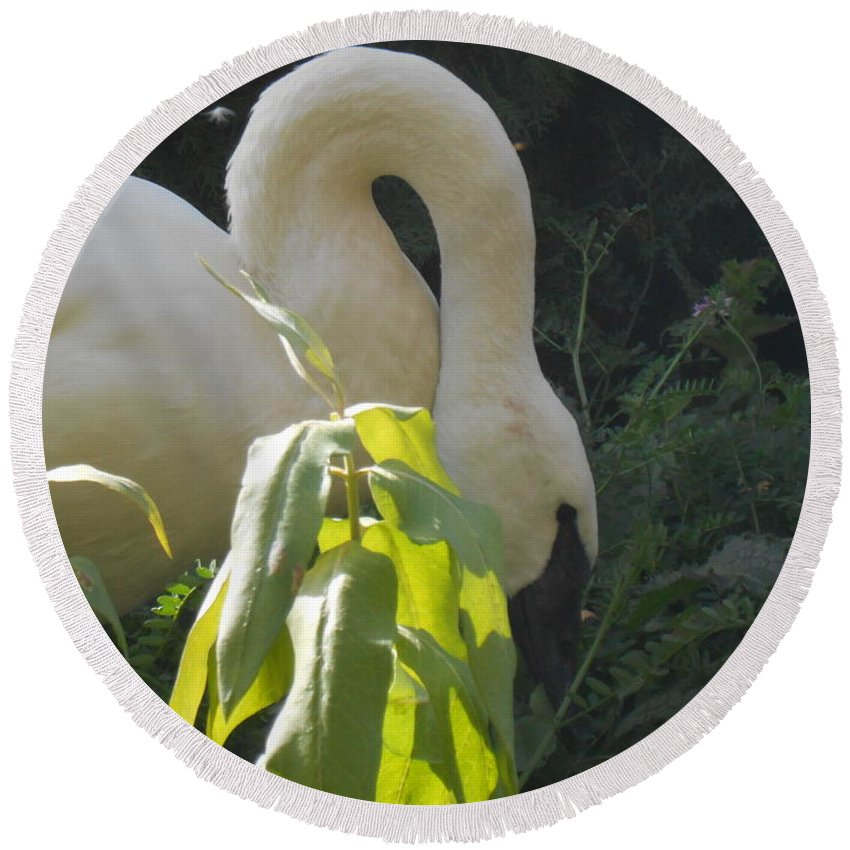 Trumpeter Swan Round Beach Towel featuring the photograph A Little Sun by LKB Art and Photography
