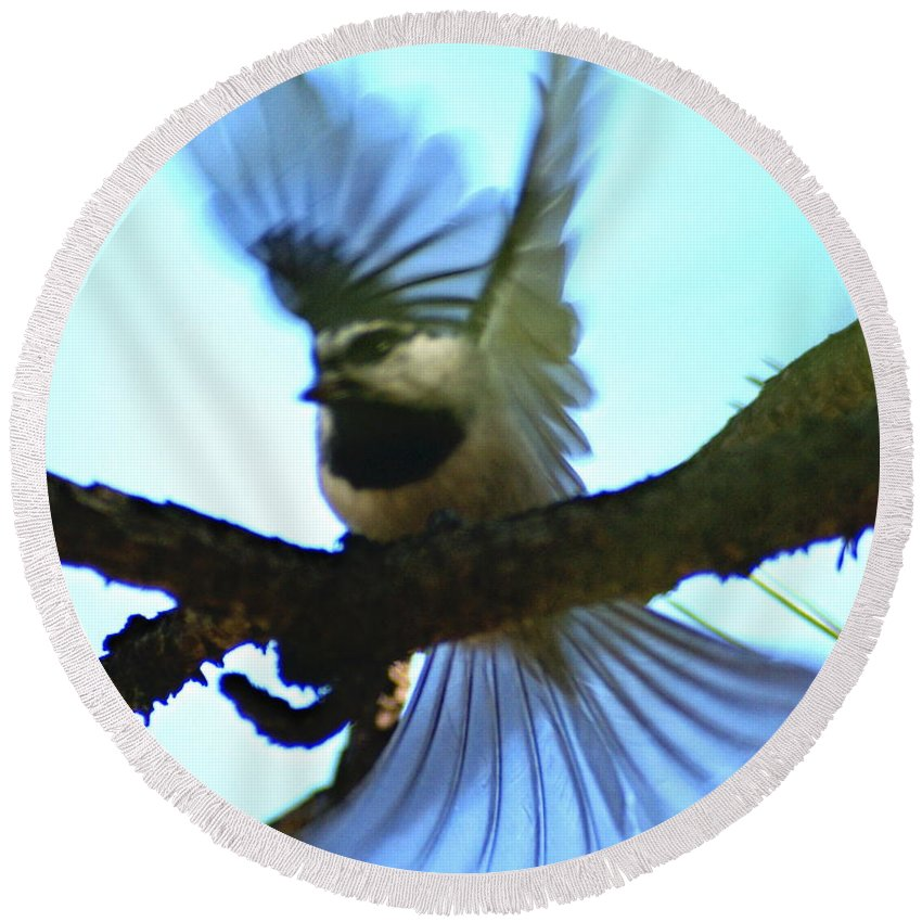 Birds Round Beach Towel featuring the photograph A Mountain Chickadee Taking Off by Ben Upham III