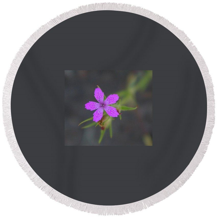 Floral Round Beach Towel featuring the photograph A Perky Little Blossom by Jeff Swan