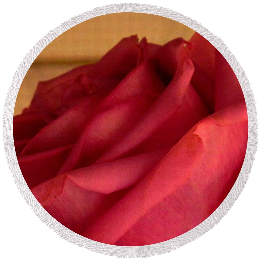 Rose Round Beach Towel featuring the photograph A Rose In Horizonal by Ian MacDonald