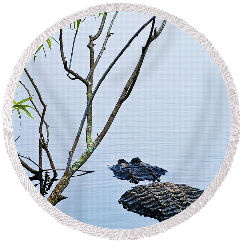 Alligator Round Beach Towel featuring the photograph A Rough Patch by Christopher Holmes