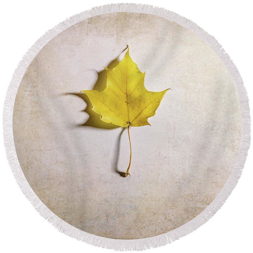 Maple Leaf Round Beach Towel featuring the photograph A Single Yellow Maple Leaf by Scott Norris