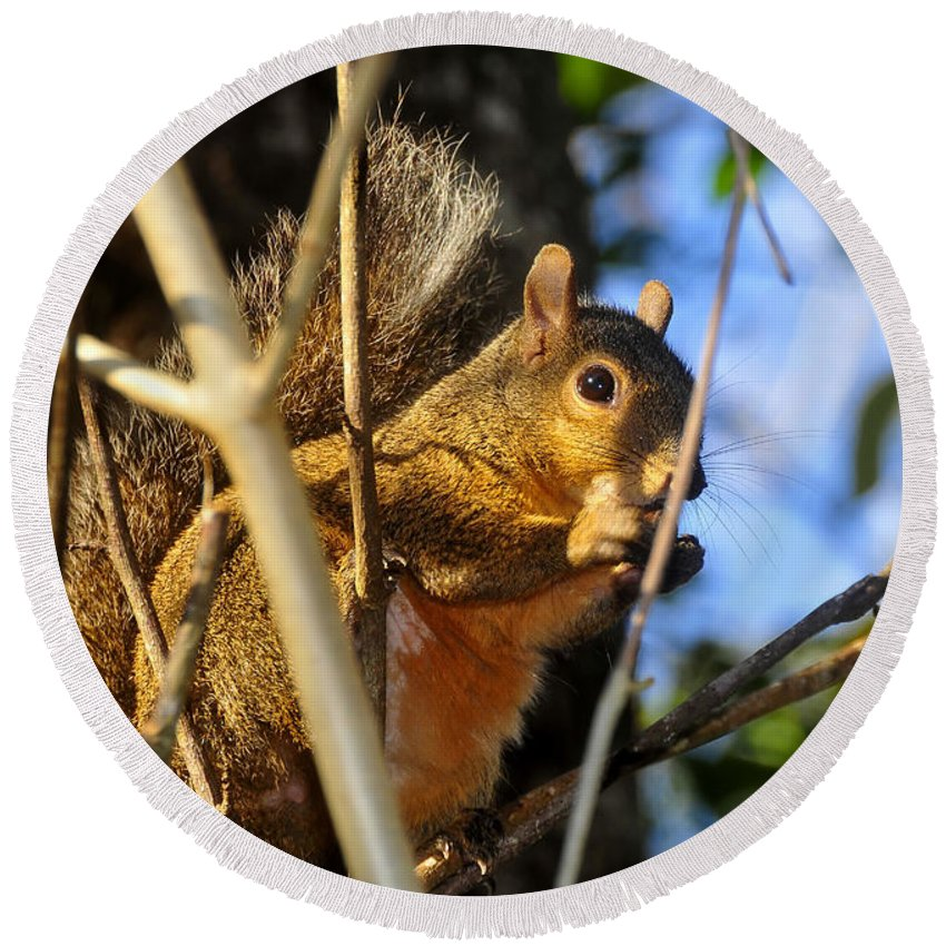 Squirrel Round Beach Towel featuring the photograph A Squirrel's Feist by David Lee Thompson