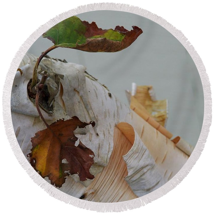 Birch Round Beach Towel featuring the photograph A Touch Of Fall by Gale Cochran-Smith