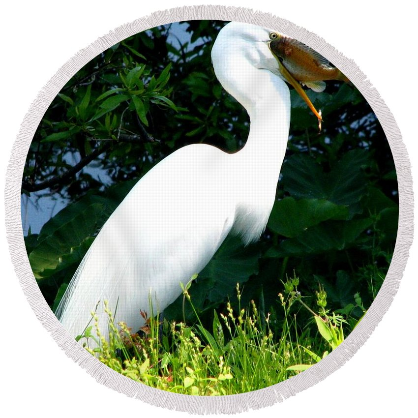 Egret Round Beach Towel featuring the photograph A Tough One To Swallow by J M Farris Photography