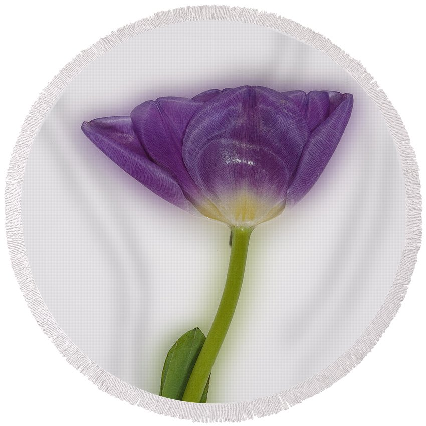 Tulip Round Beach Towel featuring the photograph A Tulip Alone by David Stone