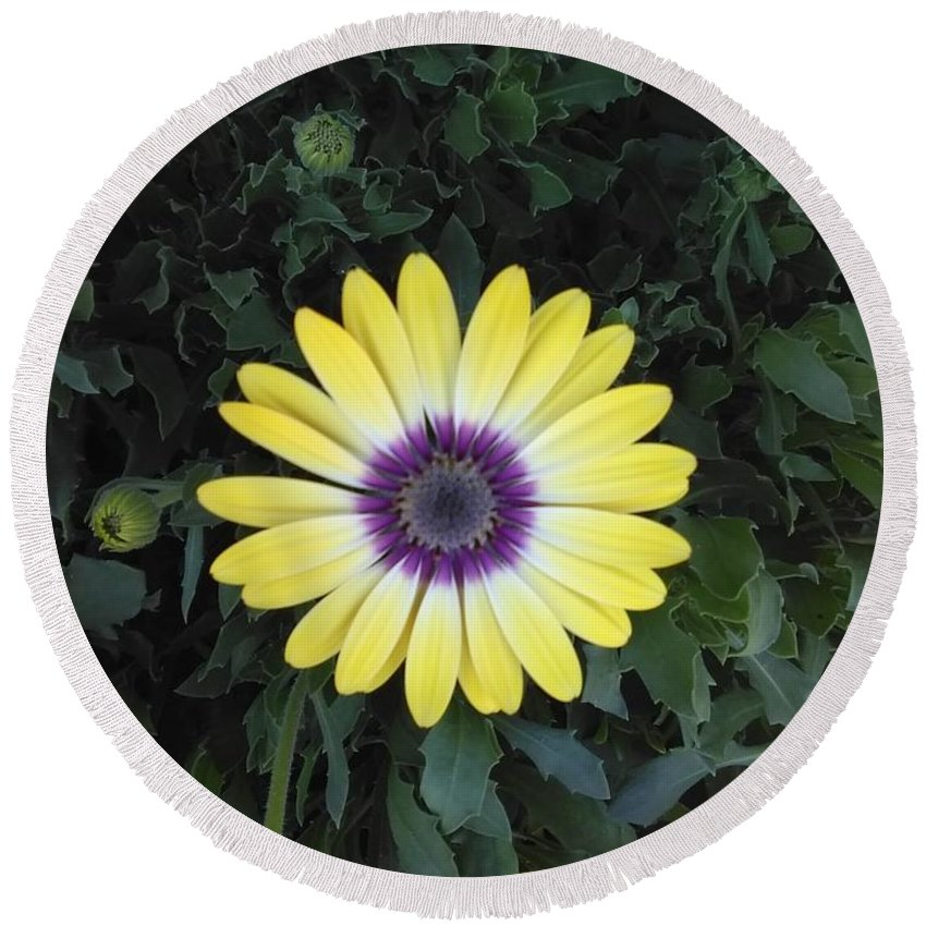 Yellow Round Beach Towel featuring the digital art A Yellow Daisy Exhibit by Barbara Rea