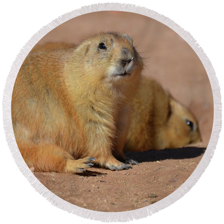 Prairie-dog Round Beach Towel featuring the photograph Absolutely Adorable Prairie Dog With A Friend by DejaVu Designs