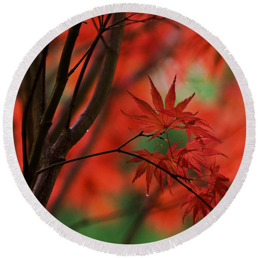 Acer Round Beach Towel featuring the photograph Acer Fanfare by Mike Reid