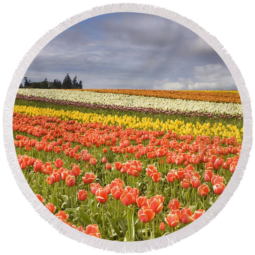 Tulips Round Beach Towel featuring the photograph Across Colorful Fields by Mike Dawson