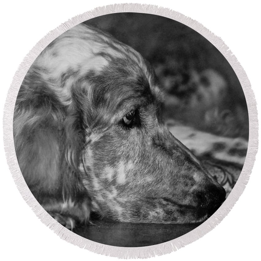 Dog Round Beach Towel featuring the photograph Addelaide by Andrea Spritzer