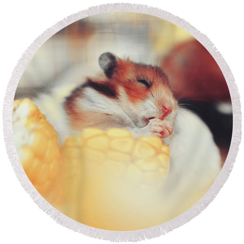 Adorable Round Beach Towel featuring the photograph Adorable Tiny Hamster Pet Feasting On Corn by Srdjan Kirtic