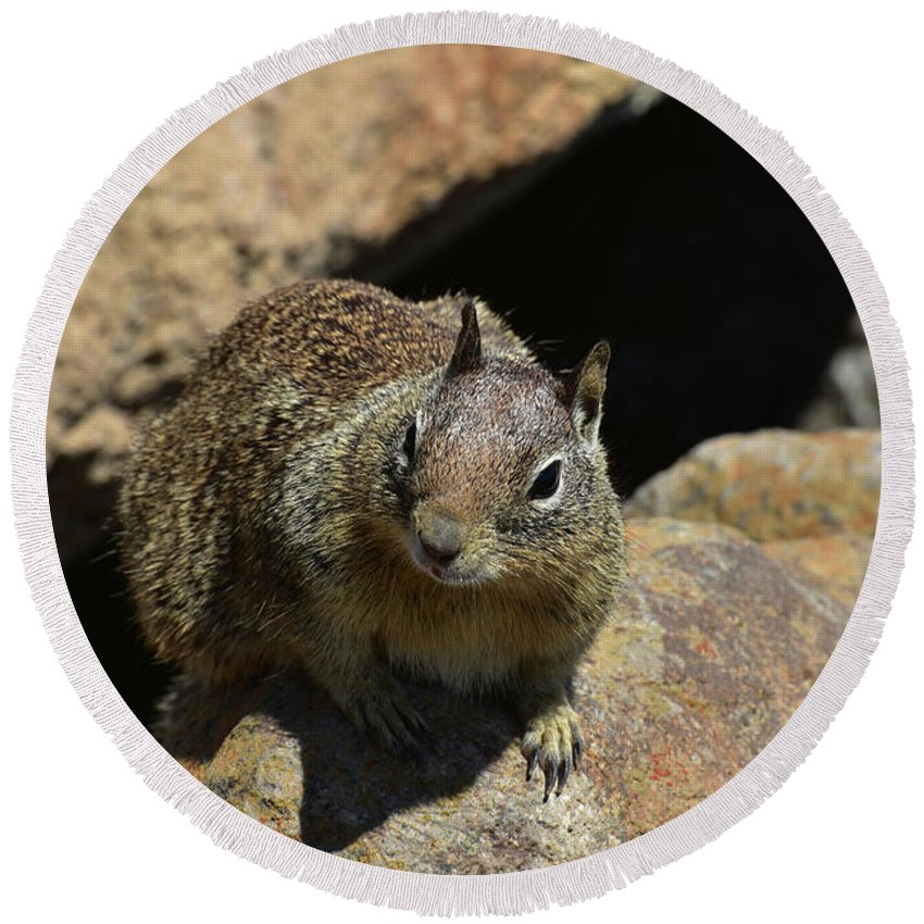 Squirrel Round Beach Towel featuring the photograph Adorable Up Close Look Into The Face Of A Squirrel by DejaVu Designs