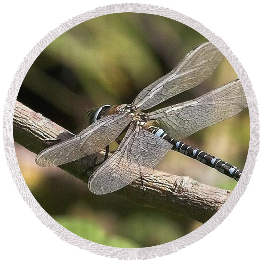 Dragonfly Round Beach Towel featuring the photograph Aeshna Juncea - Common Hawker taken At by John Edwards