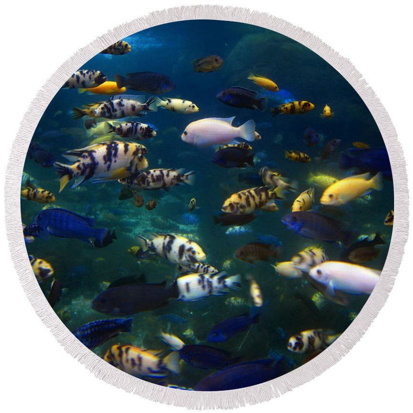 Fish Round Beach Towel featuring the photograph African Cichlids 2 by Pat Turner