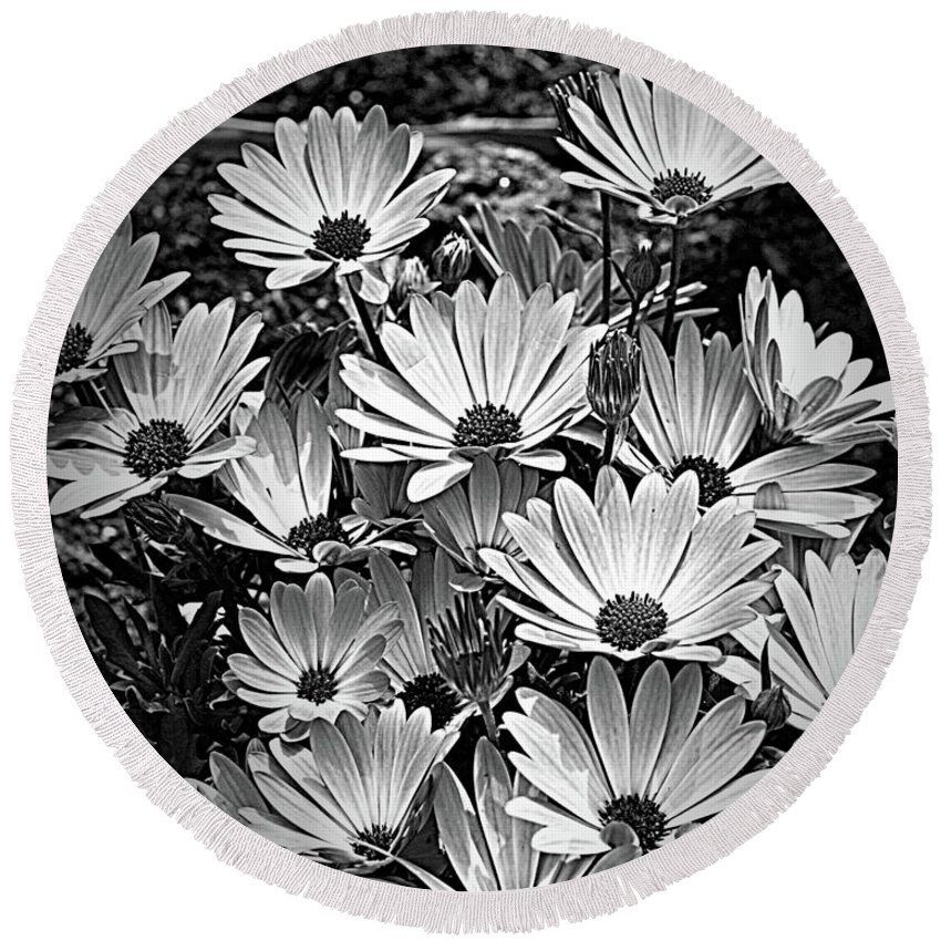 African Daisies Round Beach Towel featuring the photograph African Daisies In Black And White by Smilin Eyes Treasures