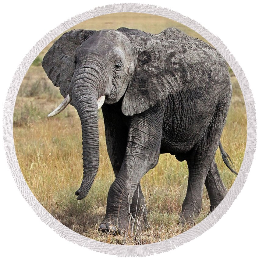 African Wildlife Round Beach Towel featuring the photograph African Elephant Happy And Free by Gill Billington