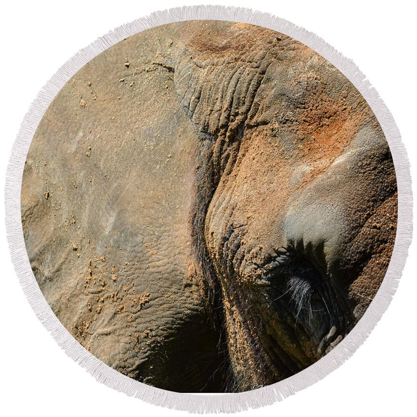 Elephant Round Beach Towel featuring the photograph African Elephant by Jennifer Wick