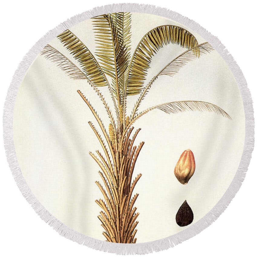 1780 Round Beach Towel featuring the photograph African Oil Palm by Granger