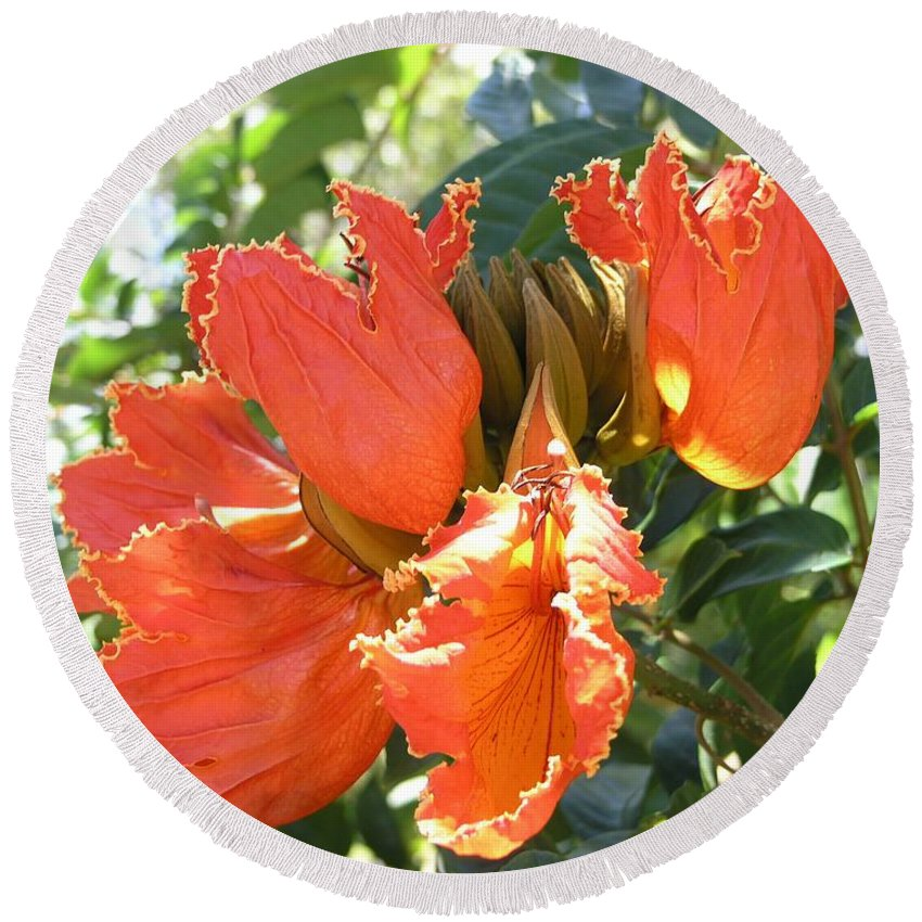 African Tulip Round Beach Towel featuring the photograph African Tulips by Mary Deal