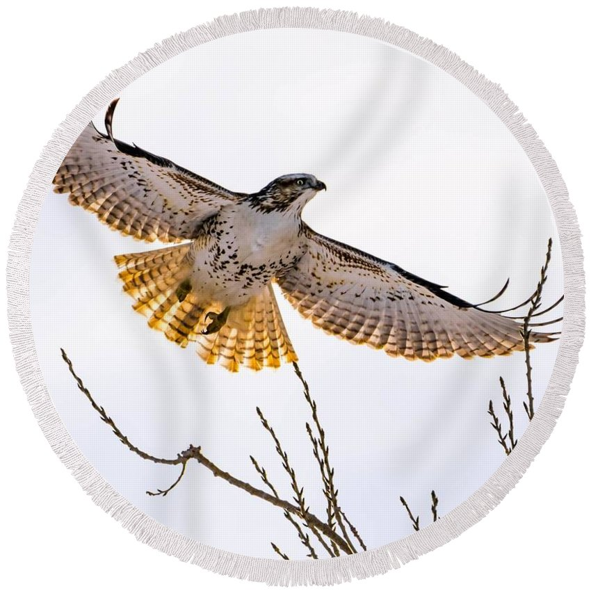 Hawk Round Beach Towel featuring the photograph Afternoon Flight by Dave Taylor