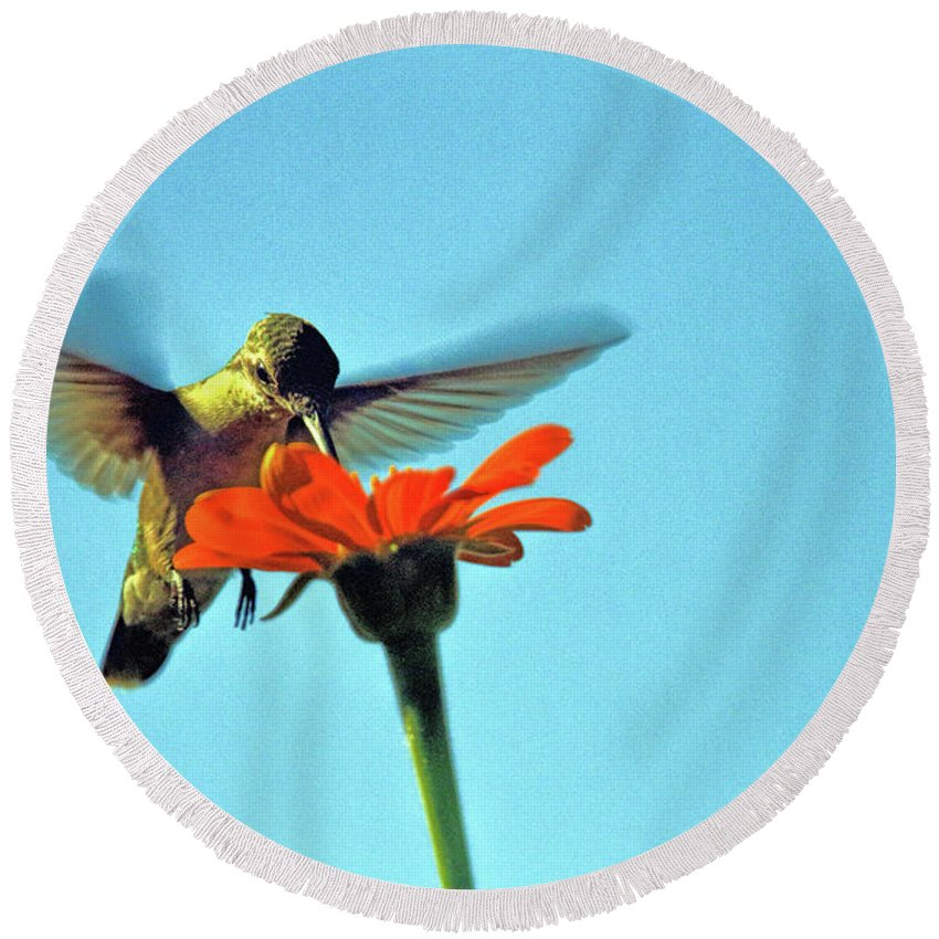 Recent Round Beach Towel featuring the photograph Afternoon Snack by Geraldine Scull