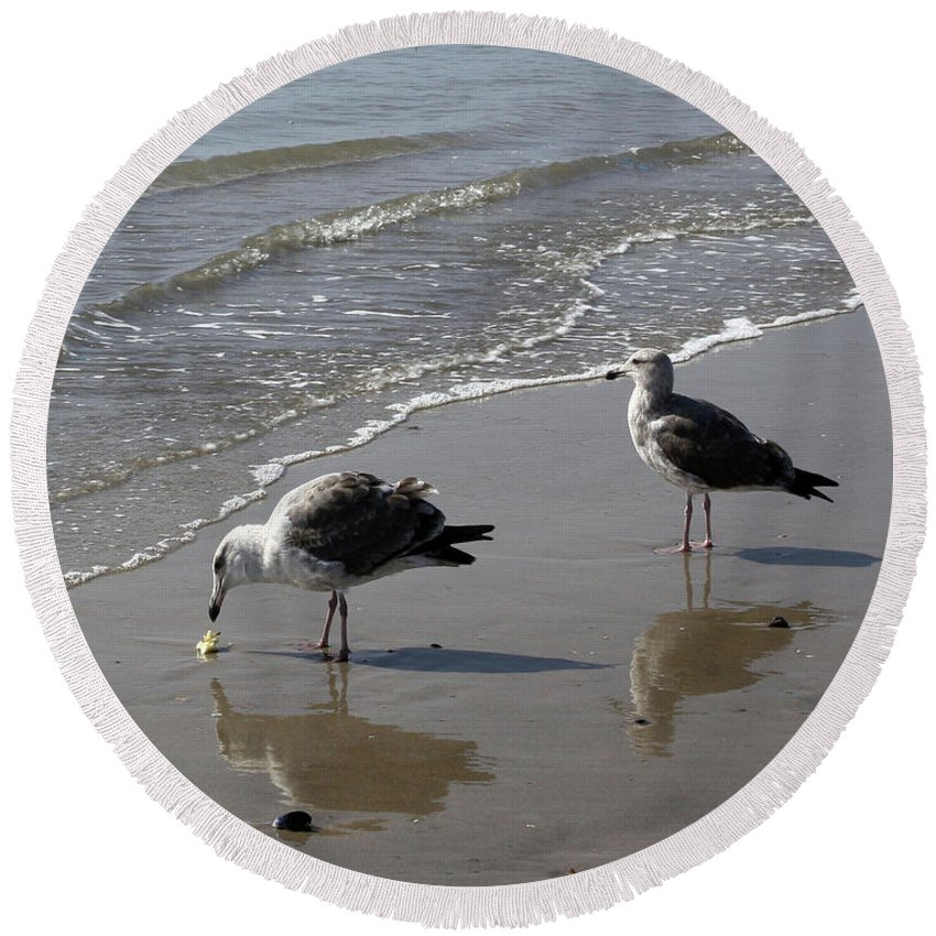 Beach Round Beach Towel featuring the photograph Afternoon Snack by Kelly Holm