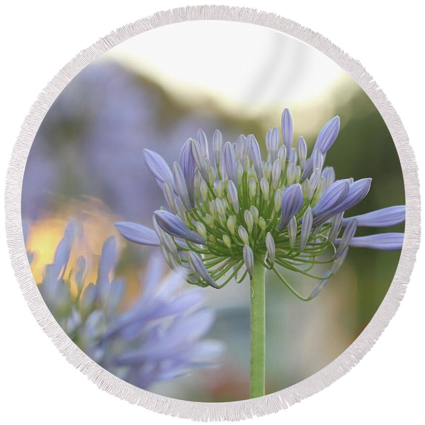 Purple Flower Round Beach Towel featuring the photograph Agapanthus Africanus - Lily Of The Nile by Carolyn Parker