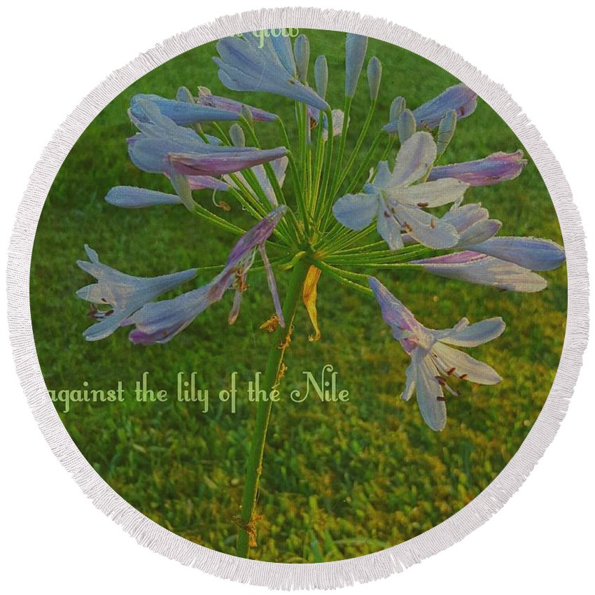 Agapanthus Round Beach Towel featuring the digital art Agapanthus Dawn by Pamela Smale Williams