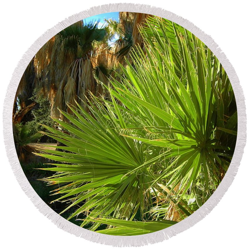 Fan Round Beach Towel featuring the photograph Agua Caliente Park by Teresa Stallings