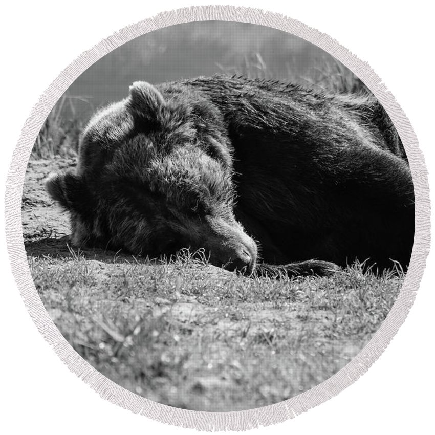 Ak Round Beach Towel featuring the photograph Alaska Grizzly - Do Not Disturb Grayscale by Jennifer White