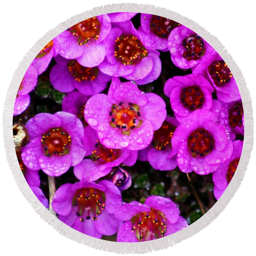 Flowers. Wild Flowers Round Beach Towel featuring the photograph Alaskan Wild Flowers by Anthony Jones