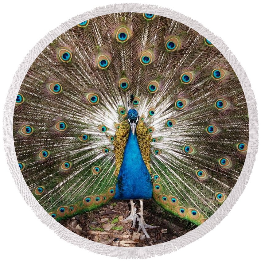 Peacock Round Beach Towel featuring the photograph All Eyes On Me by Ann Horn