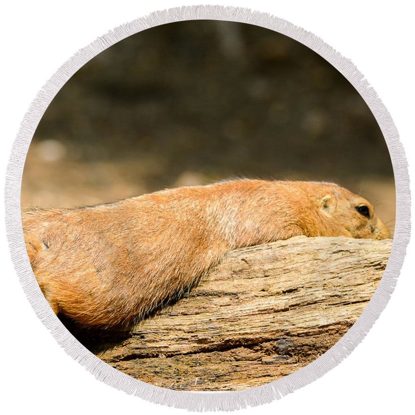 Prairie Dog Round Beach Towel featuring the photograph All Stretched Out by Jennifer Wick