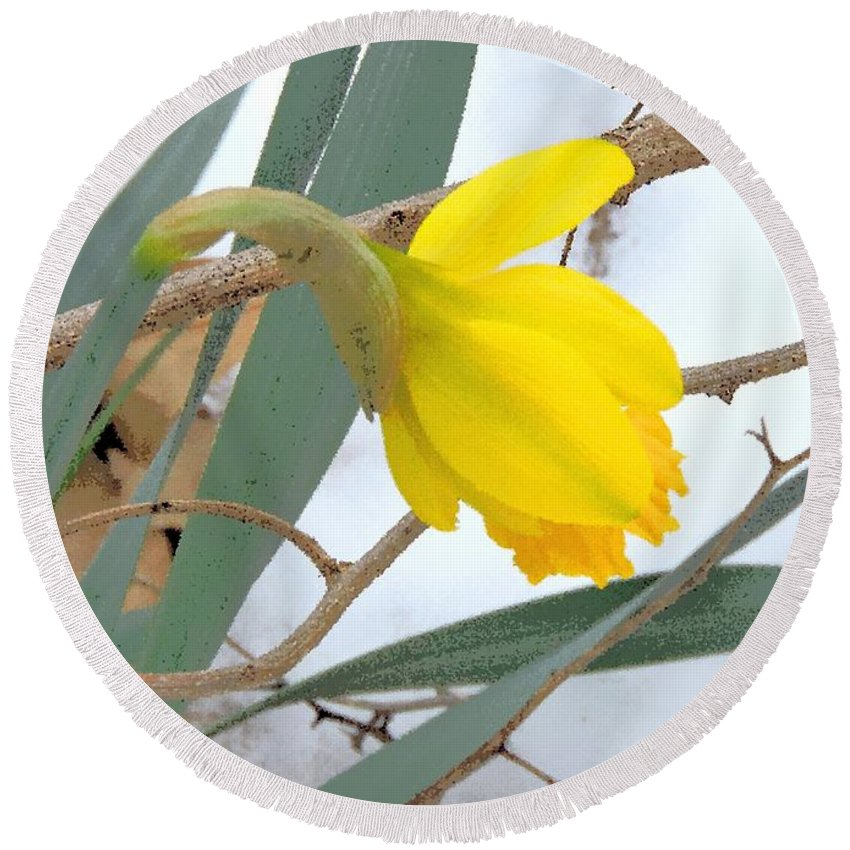 Daffodil Round Beach Towel featuring the photograph All Too Soon by Tami Quigley