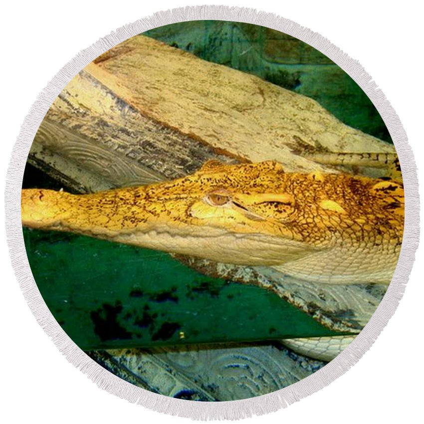 Animal Round Beach Towel featuring the photograph Alligator by Arlane Crump